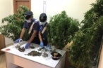 Sequestro marijuana e piante cannabis S.Agata