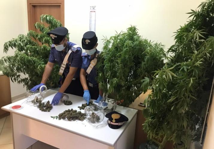 Sequestro marijuana e piante cannabis S.Agata