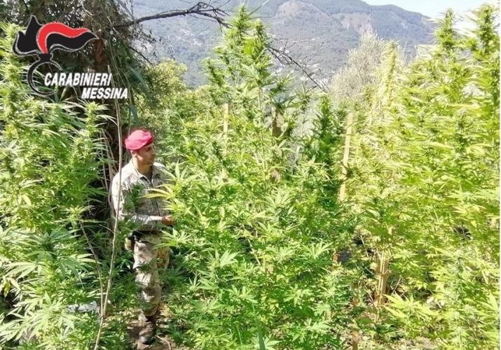 Tortorici arresto stupefacenti coltivazione marjuana